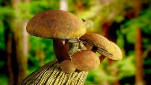 Mushroom 3D by LeandroDreamer