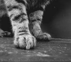 Paws by The--Pessimist