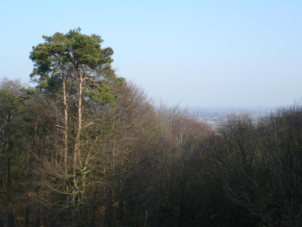 Landscape near Nijmegen by bladit