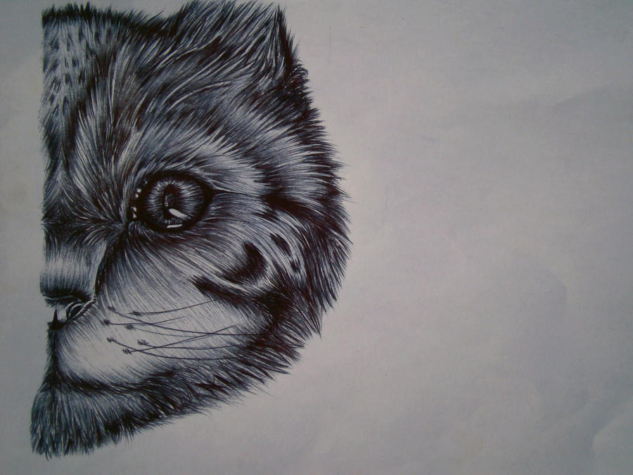 Ballpoint cat by SofieRogers