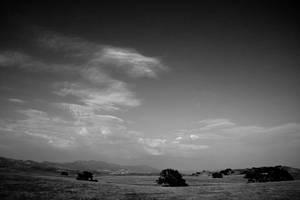 Fields by heypeter