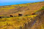 Pacific Pasture