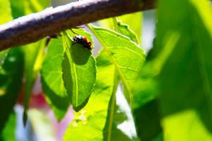 Proud Ladybug by heypeter