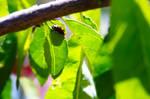 Proud Ladybug