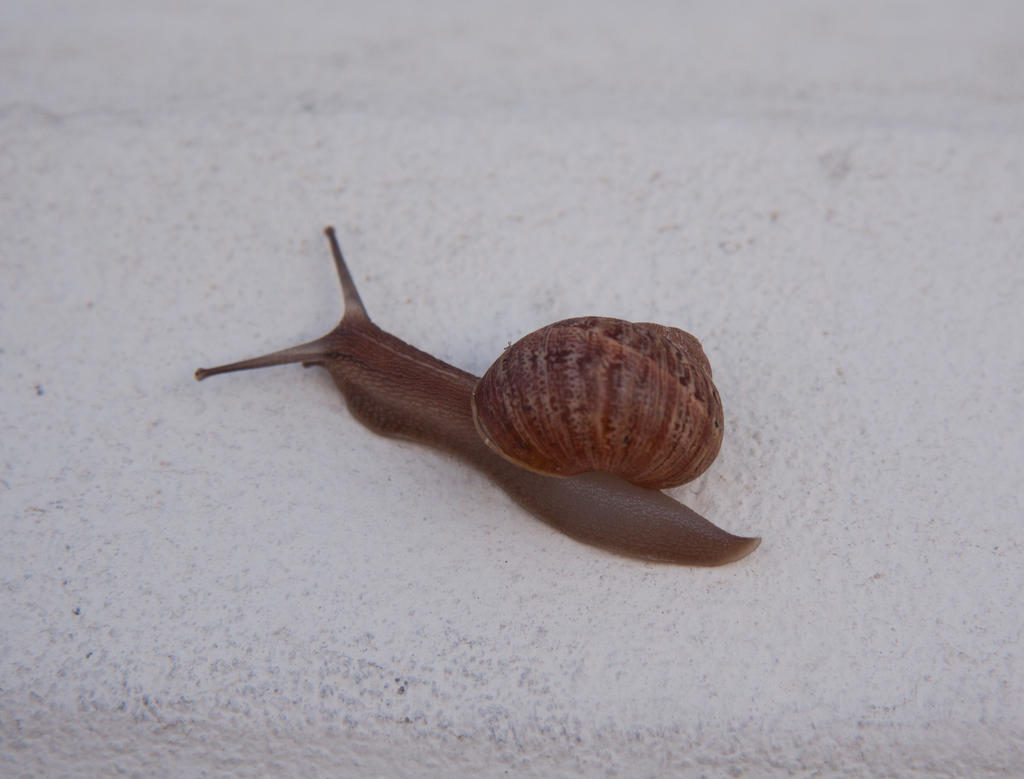 Snail by heypeter