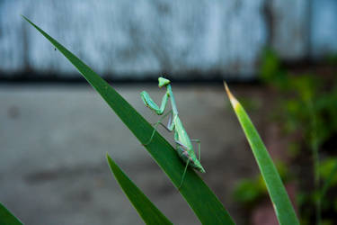 Mantis Mugging by heypeter