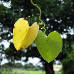 hearts by anveshdunna