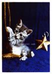 I am just a kitty by arwenita