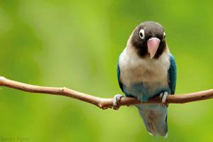 little bird by Dm3t-7zen