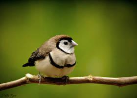 Sweet Bird by Dm3t-7zen