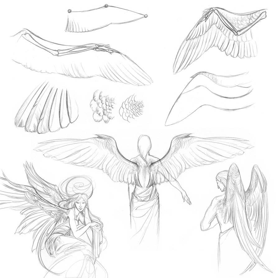 Day 13 of Sketchtember: Wings by impactbooks