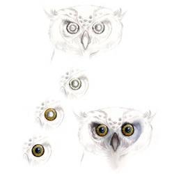 Day 19: Owl