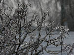 Frozen branches by marvil74