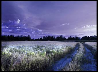 field 5 by PhotoFrama