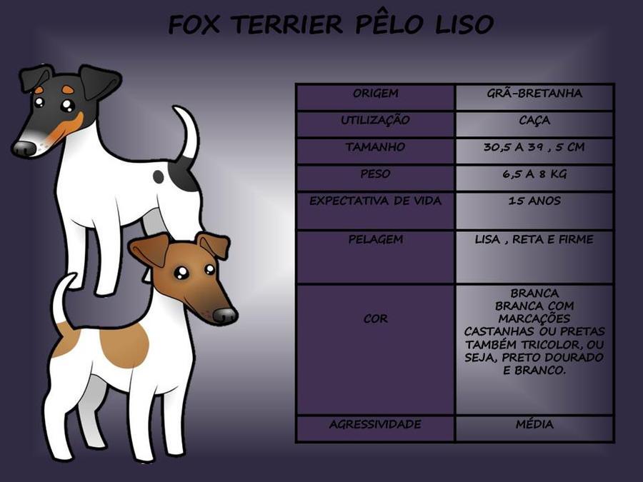 Fox Terrier Pelo Liso by GiKlingbeil on DeviantArt