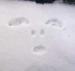 Snow dog by scarlet-dahlia