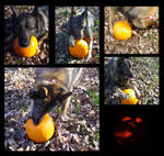 Pumpkin Carving for Dogs