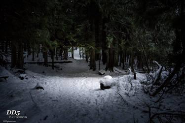 Deep dark forest by DragonDriver5