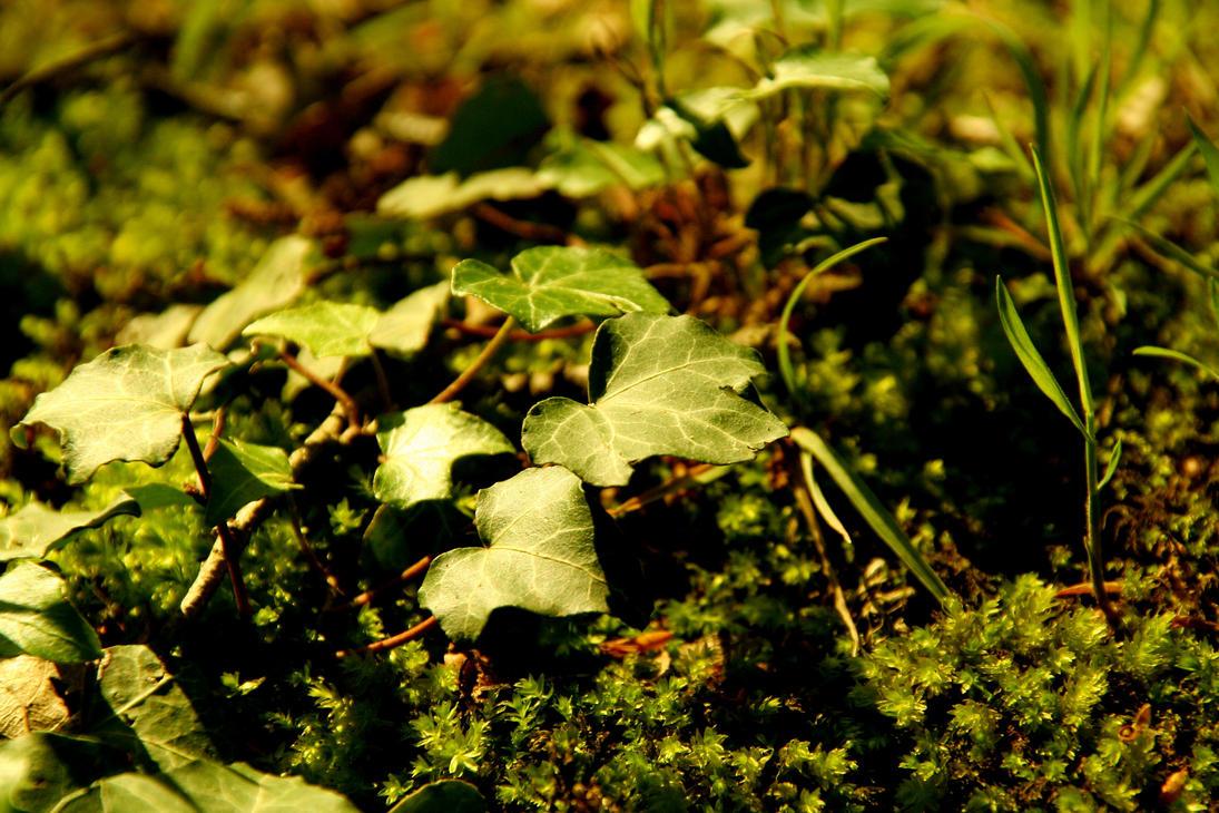 Ivy by DameTenebra