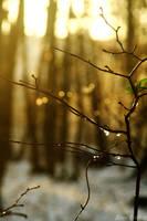 Warm light in a cold morning by DameTenebra