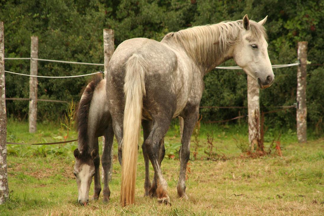 Foal stock 01 by DameTenebra