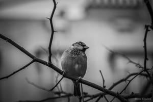 Cold wings by DameTenebra
