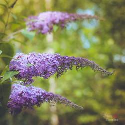 Butterfly tree by DameTenebra