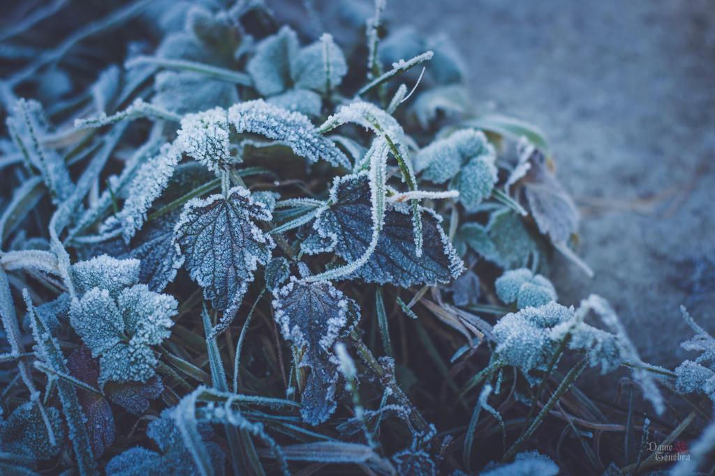 Frozen by DameTenebra