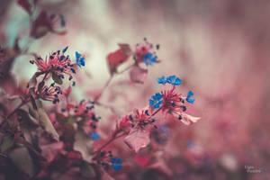 Blue were the flowers in my dream by DameTenebra