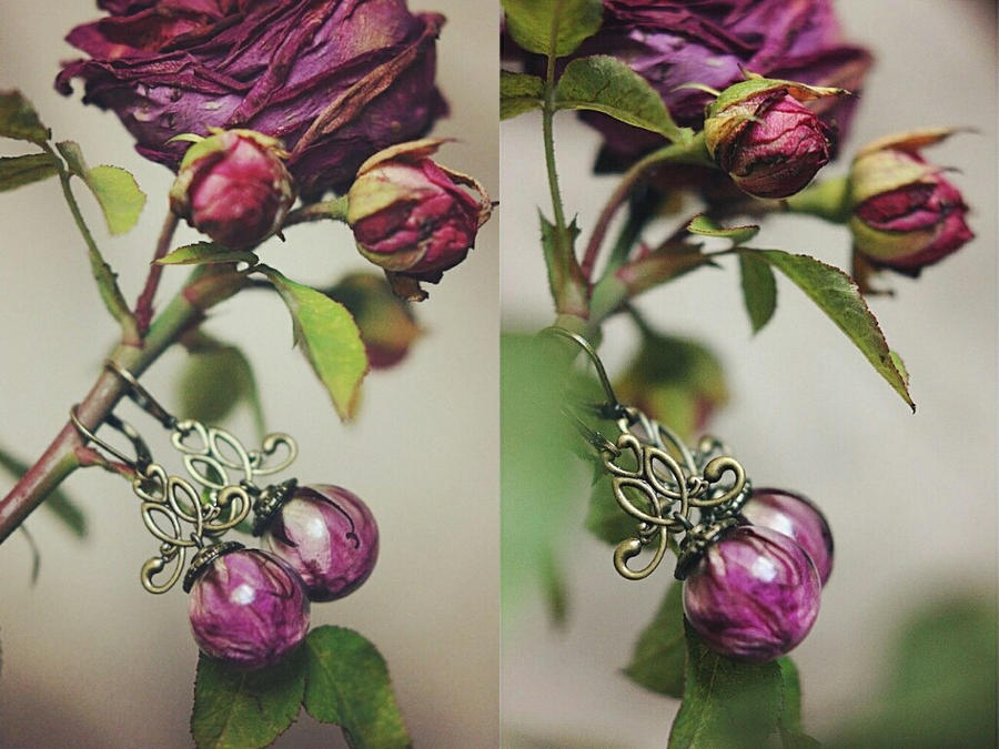 wild roses by ShamAnn366