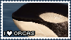 I Love Orcas Stamp by GothScarlet