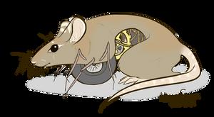 Steampunk rat by NaurEvan