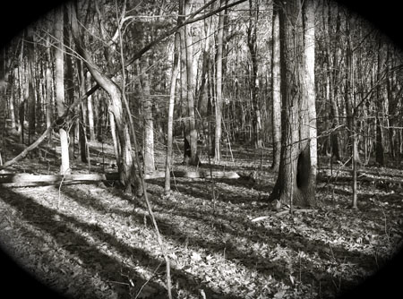 Worcester Woods 10 by scarygirl67