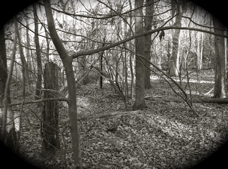 Worcester Woods 11 by scarygirl67
