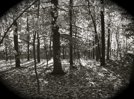 Worcester Woods 14 by scarygirl67