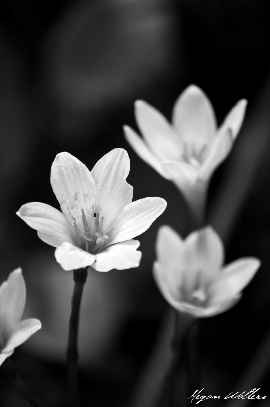 Small White Flowers By Miern On Deviantart
