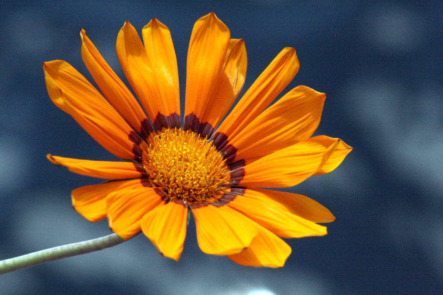 Orange Flower by kbeams