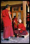little monks by newtone