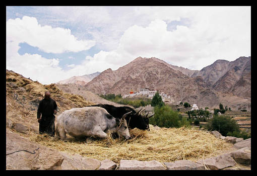 Farmers in Ladakh
