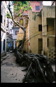 Tree in Varanasi