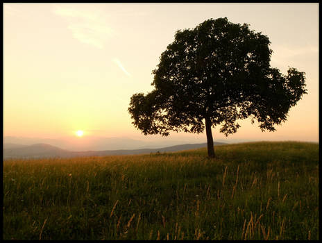 Late Summer Sunset With Tree