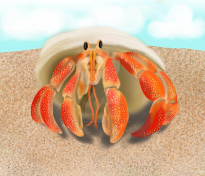 Hermit Crab by Storm-Ryder99