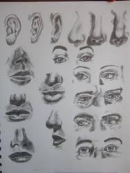 Facial Features Study