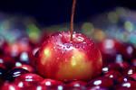 Fruit to Lilliput