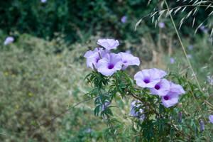 Flowers 17