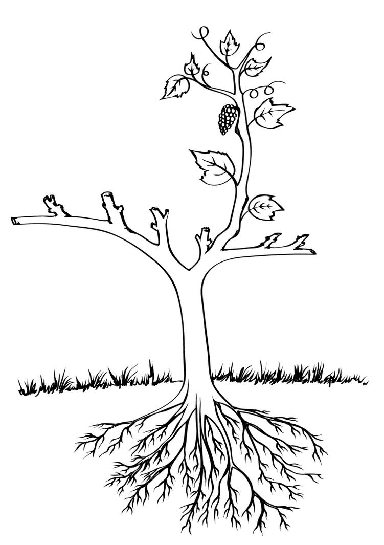 Anatomy-of-Grapevine-01 by silappathikaram on DeviantArt