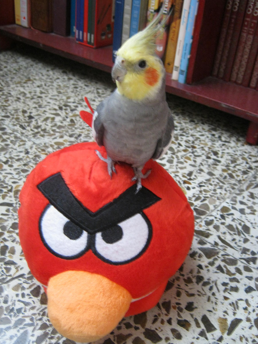 Angry Birds by SeshatNione