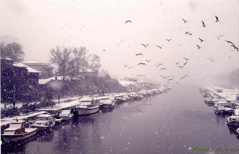 Birds of winter. by quisatzh