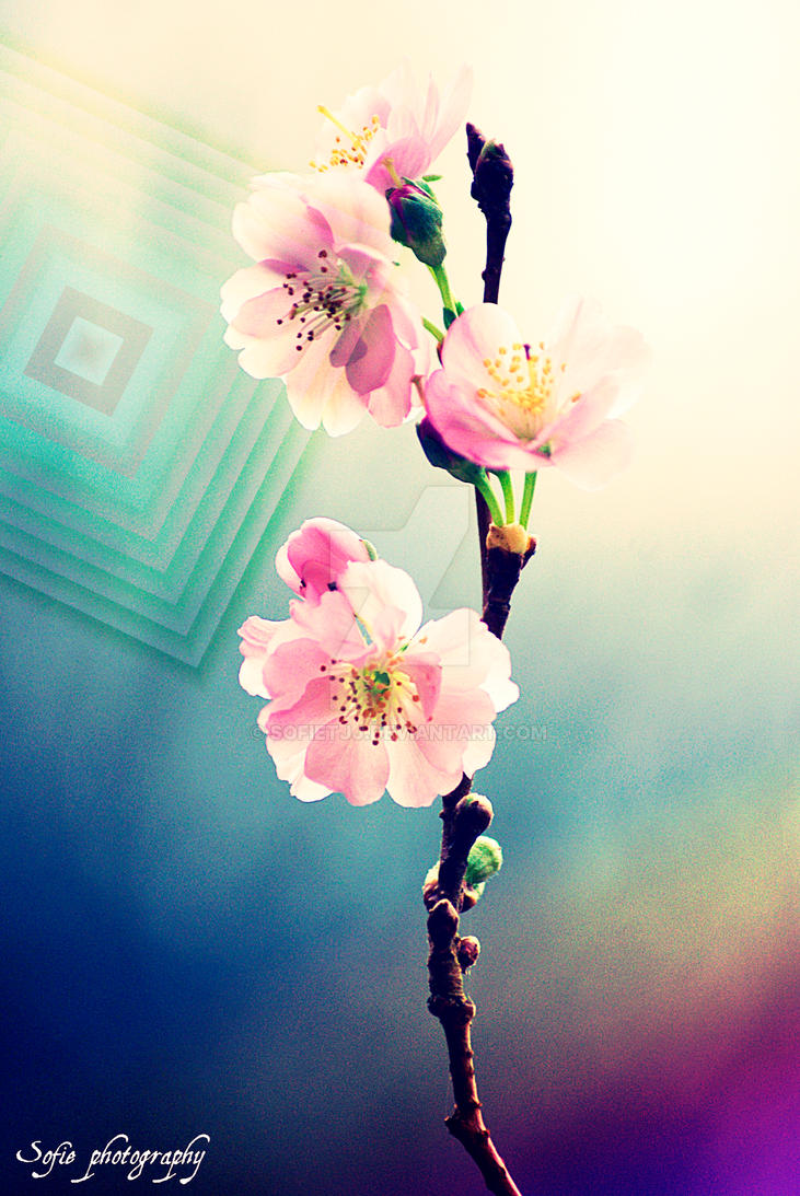 Blossom by sofietjj
