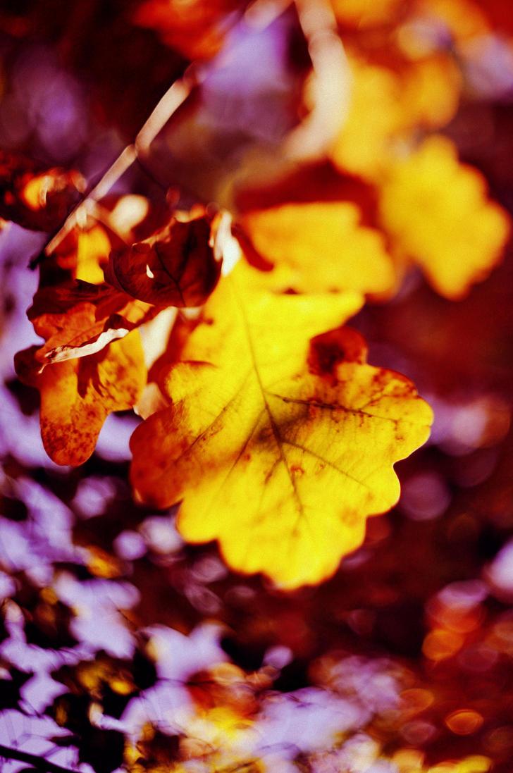 Autumn leaf. by maziak-ciut-inaczej
